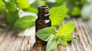 EssentailOilsShop.net-Peppermint-essential-oils-1
